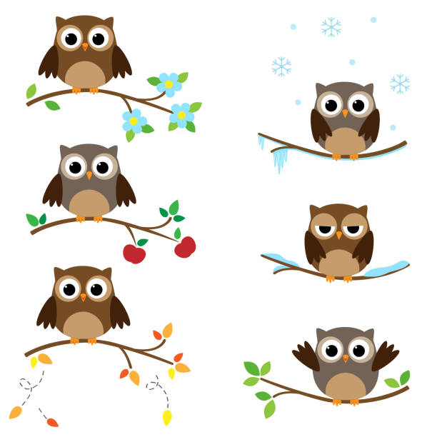 owls on branches - sowa stock illustrations