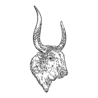 Ox, bull or male cow head. Chinese Happy New Year 2021 symbol and horoscope sign. Year of the ox and lunar new year. Hand drawing vector.