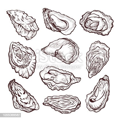 Oyster sea shellfish sketch, pencil drawing set. Bivalve molluscs with rough irregular shells. Vector illustration isolated on white background