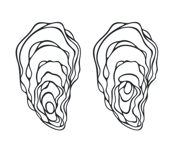 Oyster set. Isolated oyster  on white background vector art illustration