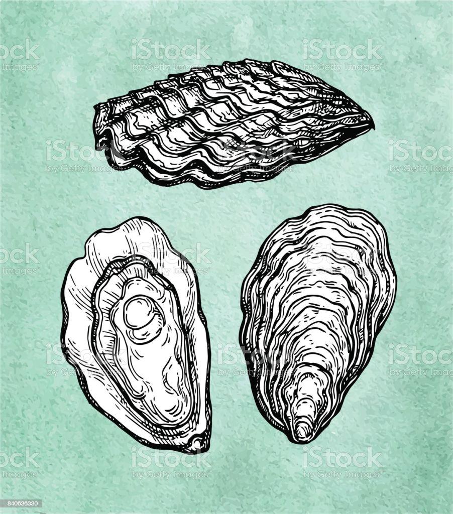 Oysters ink sketch. vector art illustration