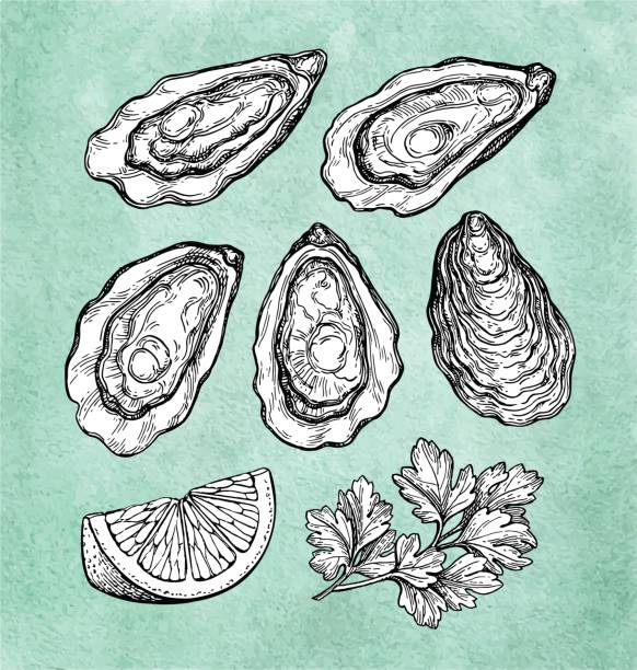 Oysters with lemon and parsley. vector art illustration