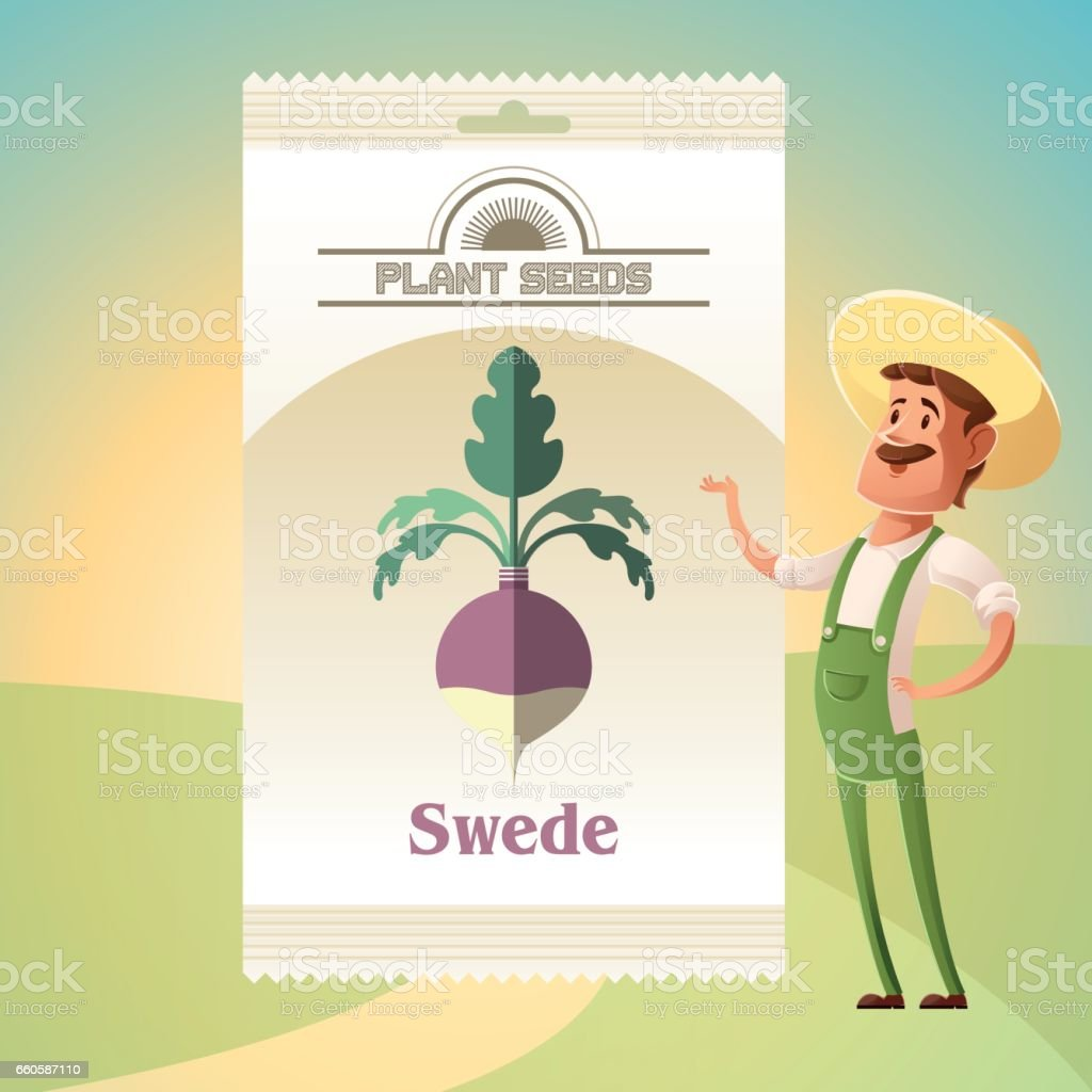 Pack of Swede seeds royalty-free pack of swede seeds stock vector art & more images of box - container