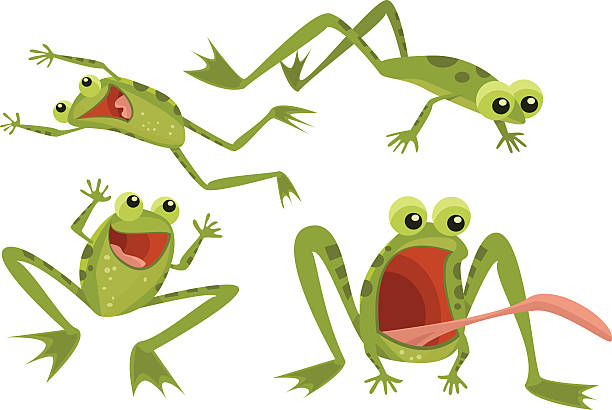 page of frogs - amphibians stock illustrations