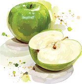 Fine illustration shown an green apple / cut section with painting stroke style