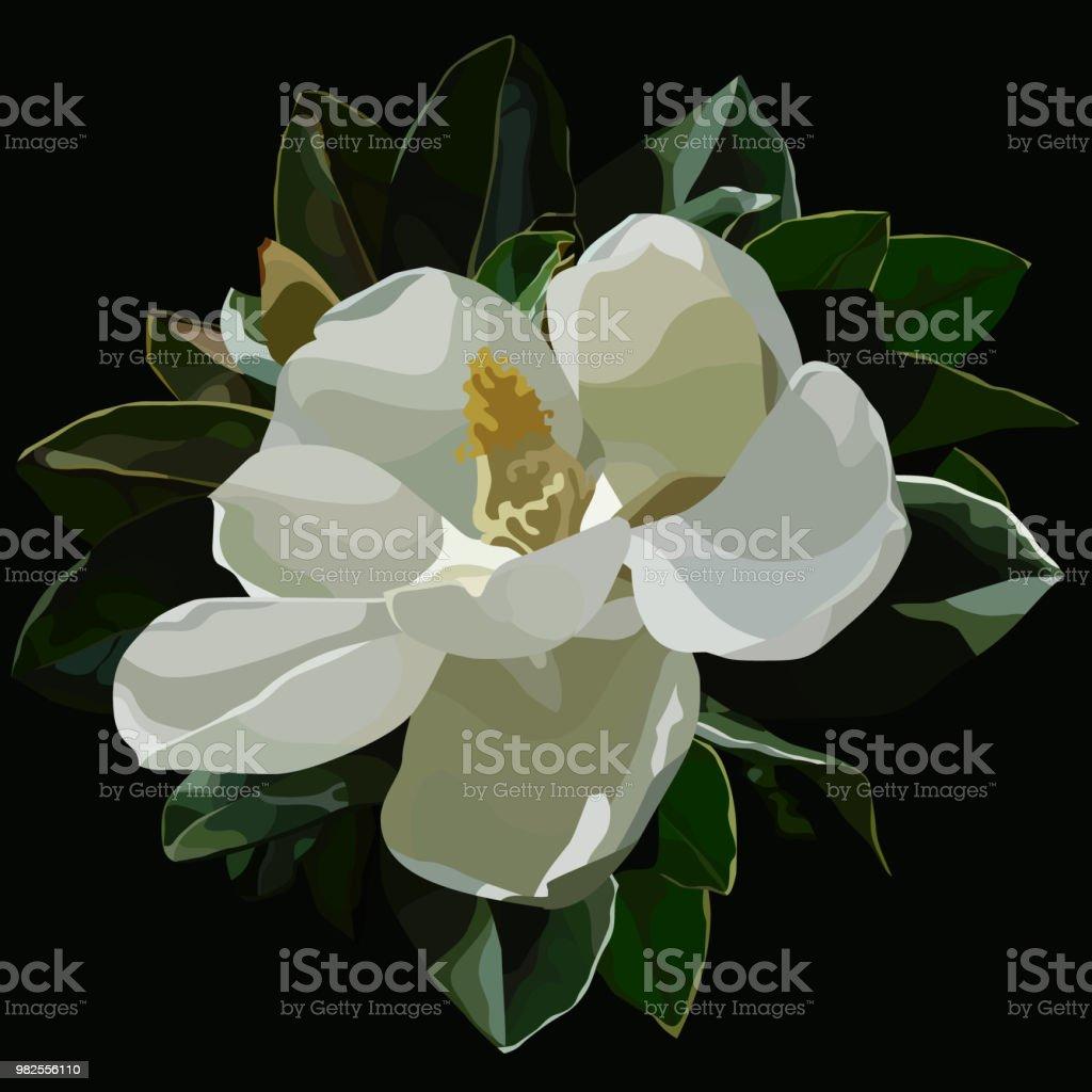 grote bloei witte magnolia bloemen op een zwarte achtergrond geschilderd - Royalty-free Blad vectorkunst