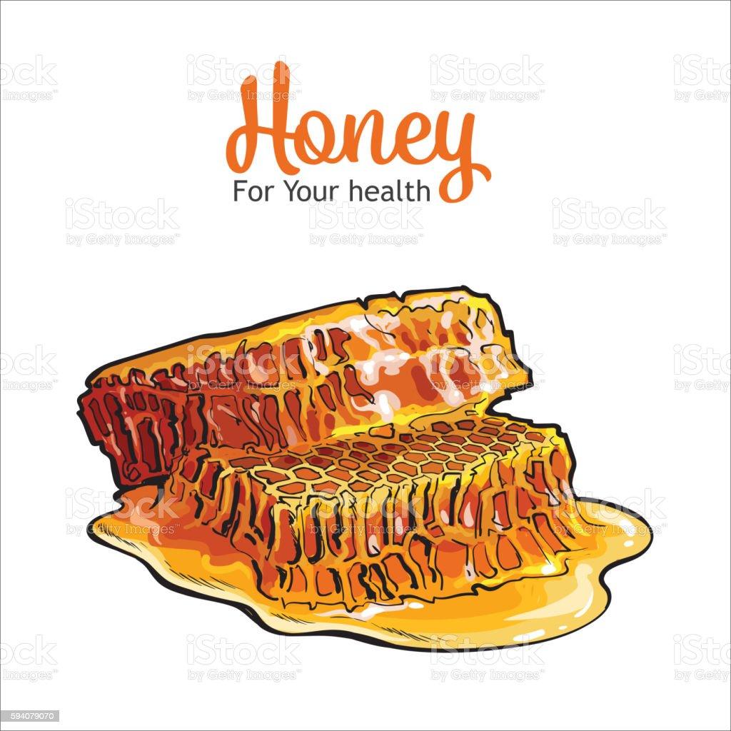 Pair of honeyed honeycombs isolated on white background vector art illustration
