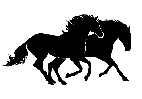 pair of horses black vector silhouette