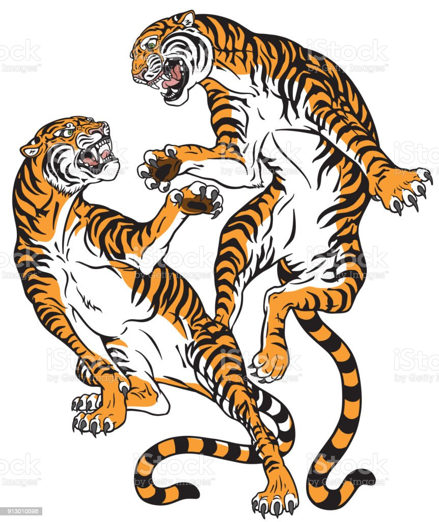 pair of tigers in the battle vector art illustration