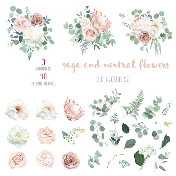 Pale pink camellia, dusty rose, ivory white peony, blush protea, nude pink ranunculus Pale pink camellia, dusty rose, ivory white peony, blush protea, nude pink ranunculus, eucalyptus big vector design set. Wedding neutral sage and beige flowers. All elements are isolated and editable flowers stock illustrations
