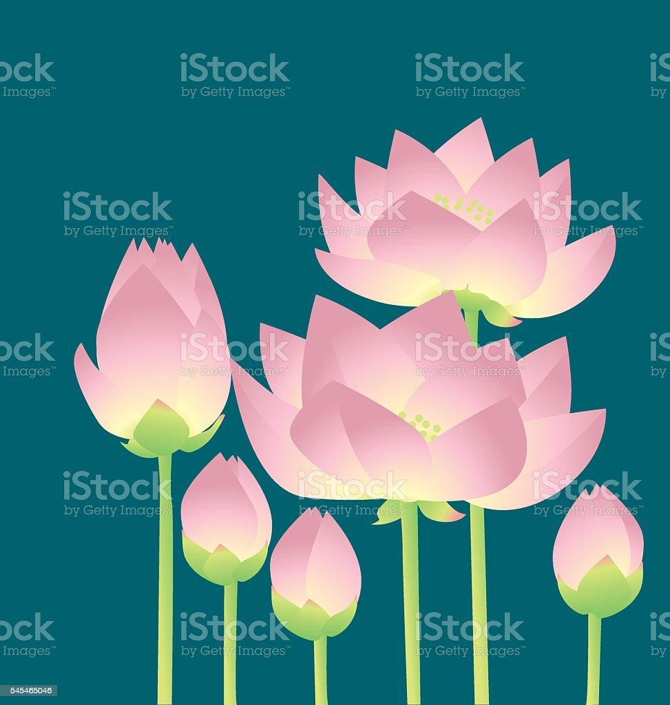 pale rosy lotus lilies decorative floral element. vector art illustration