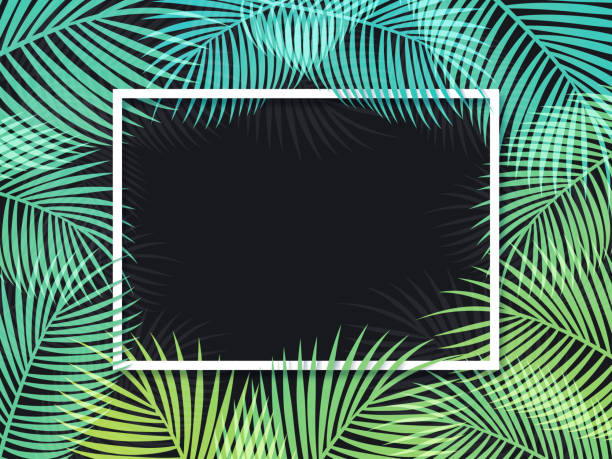 palm frame background - palm leaf stock illustrations, clip art, cartoons, & icons