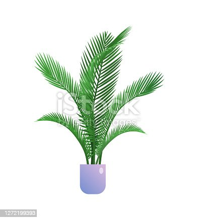 Palm houseplant in flowerpot. Indoor exotic tropical plant for organic home or office interior decoration botanical design flat vector illustration isolated on white background