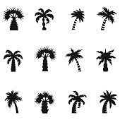 Palm icon set , vector illustration