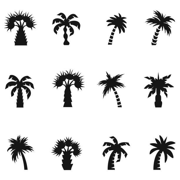illustrations, cliparts, dessins animés et icônes de jeu d'icônes de palm - palmier
