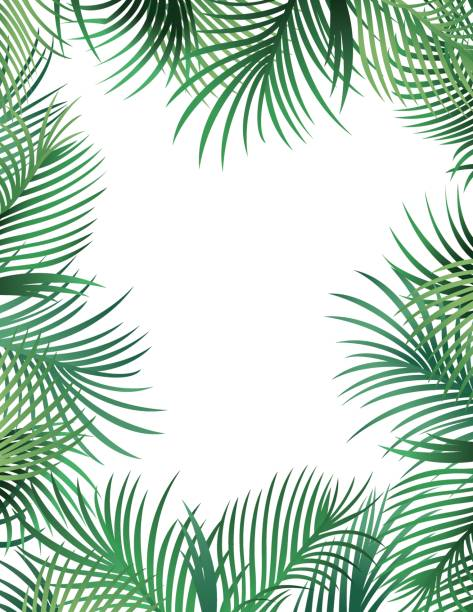 palm leaf border - palm leaf stock illustrations, clip art, cartoons, & icons