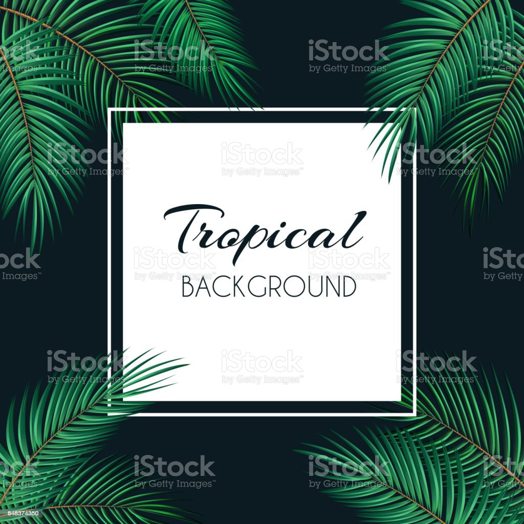 Palm Leaf Vector Background With White Frame Illustratio Stock ...