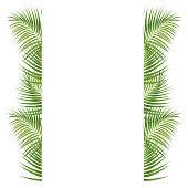 istock Palm Leaves Border 907157488