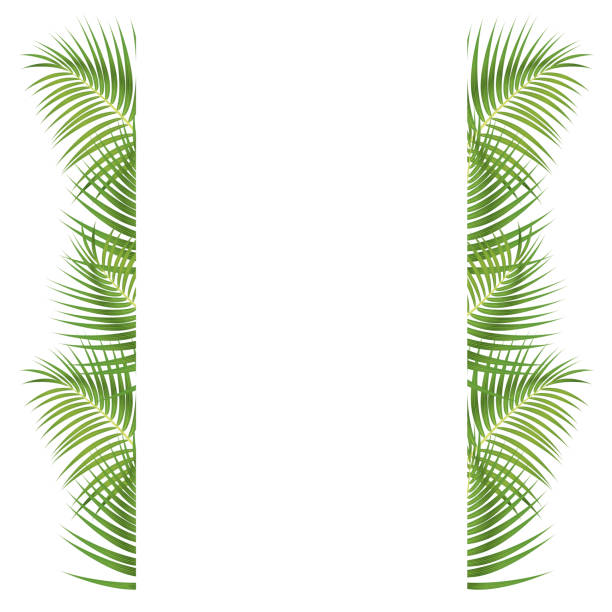 palm leaves border - palm leaf stock illustrations, clip art, cartoons, & icons
