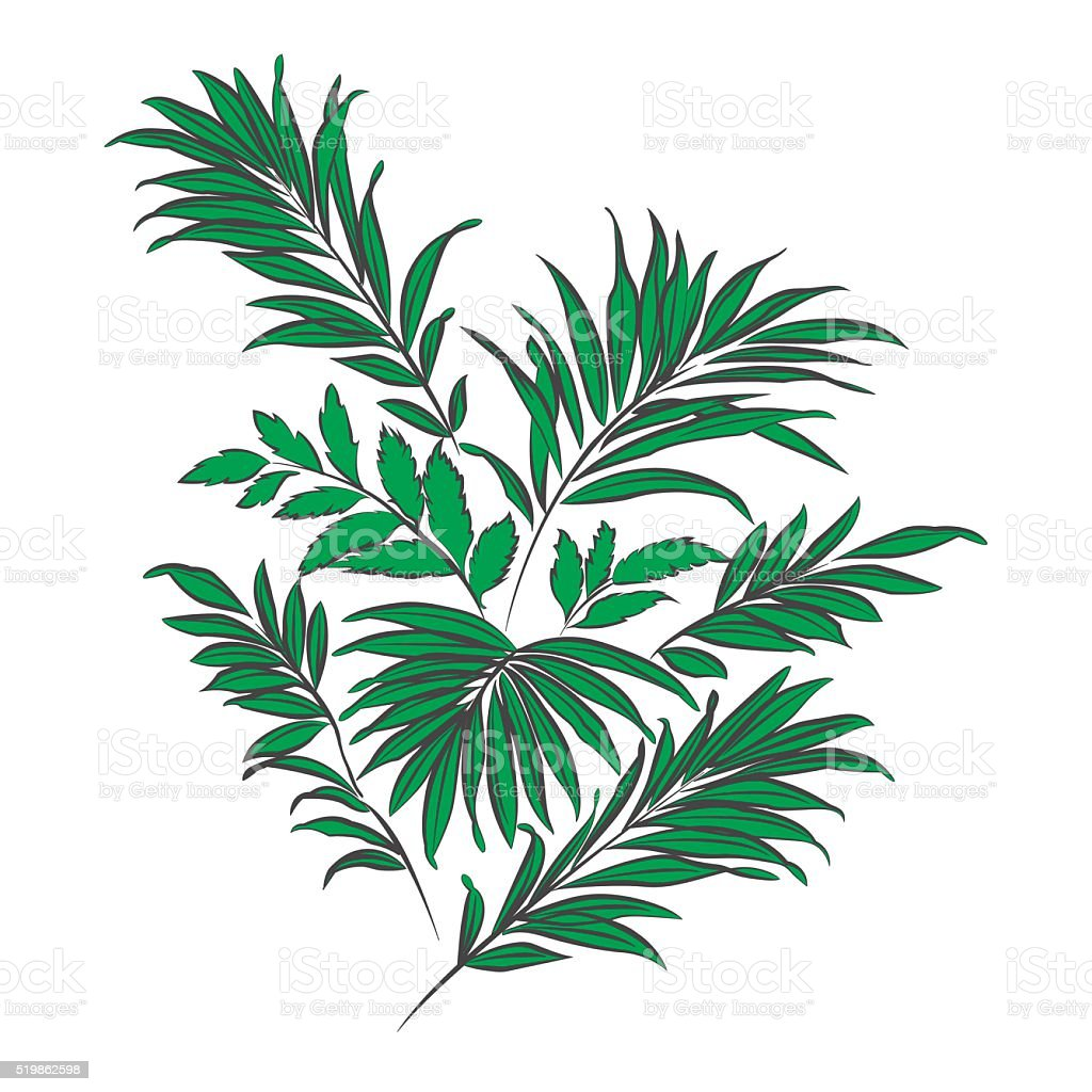Palm Leaves Doodle Style Stock Illustration Download Image Now Istock