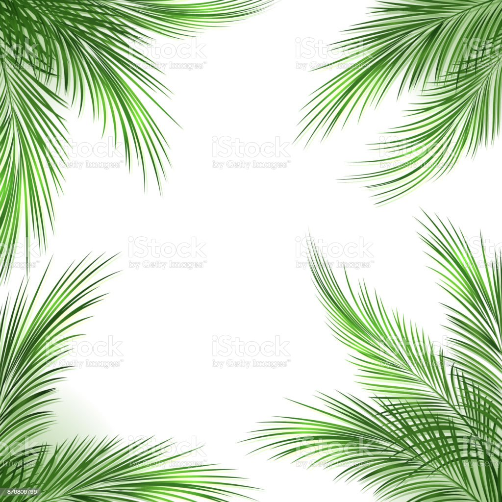 Palm Leaves Frame Stock Illustration Download Image Now Istock All prints are shipped in an hardback envelope. palm leaves frame stock illustration download image now istock