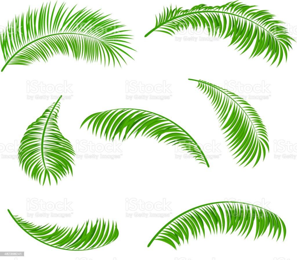 Palm leaves vector art illustration