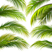 Palm leaves isolated on white. Vector illustration