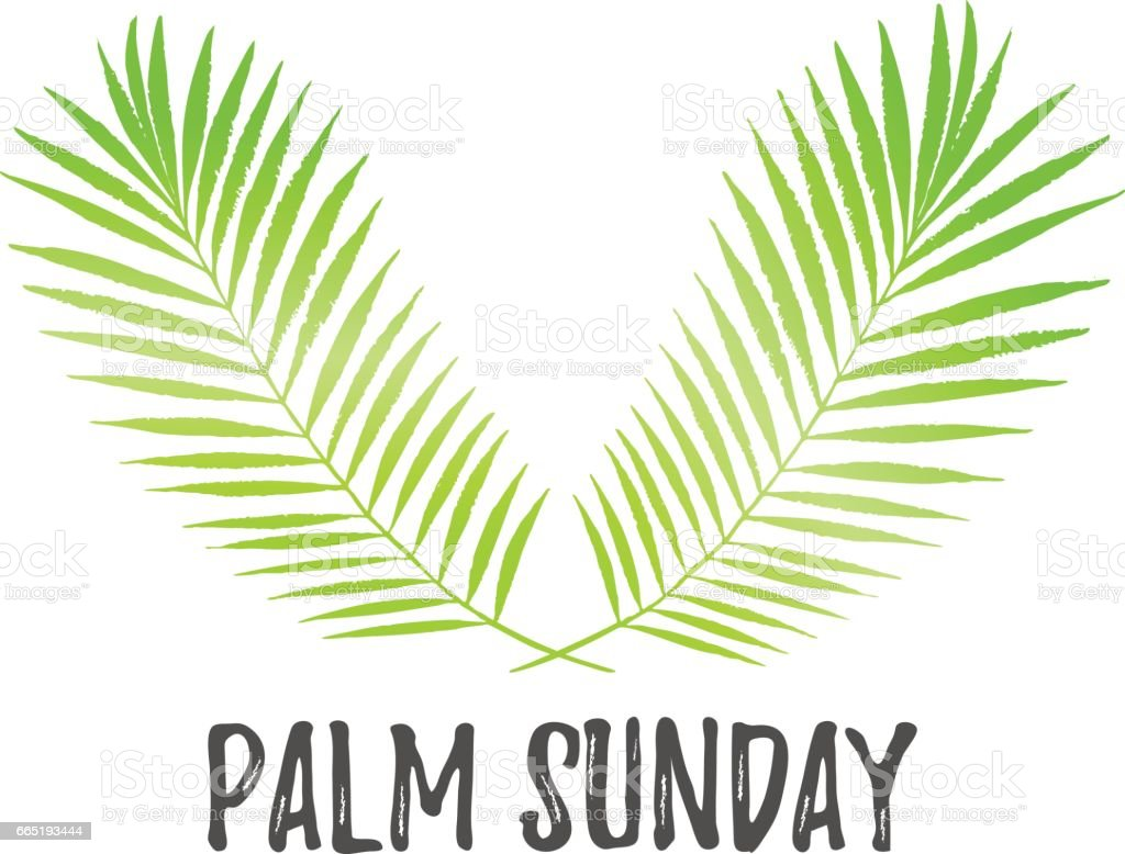 palm sunday holiday card poster with palm leaves vector background