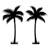 Tropical palm trees. Vector silhouettes isolated on white background. Hand drawn illustration of palm trees
