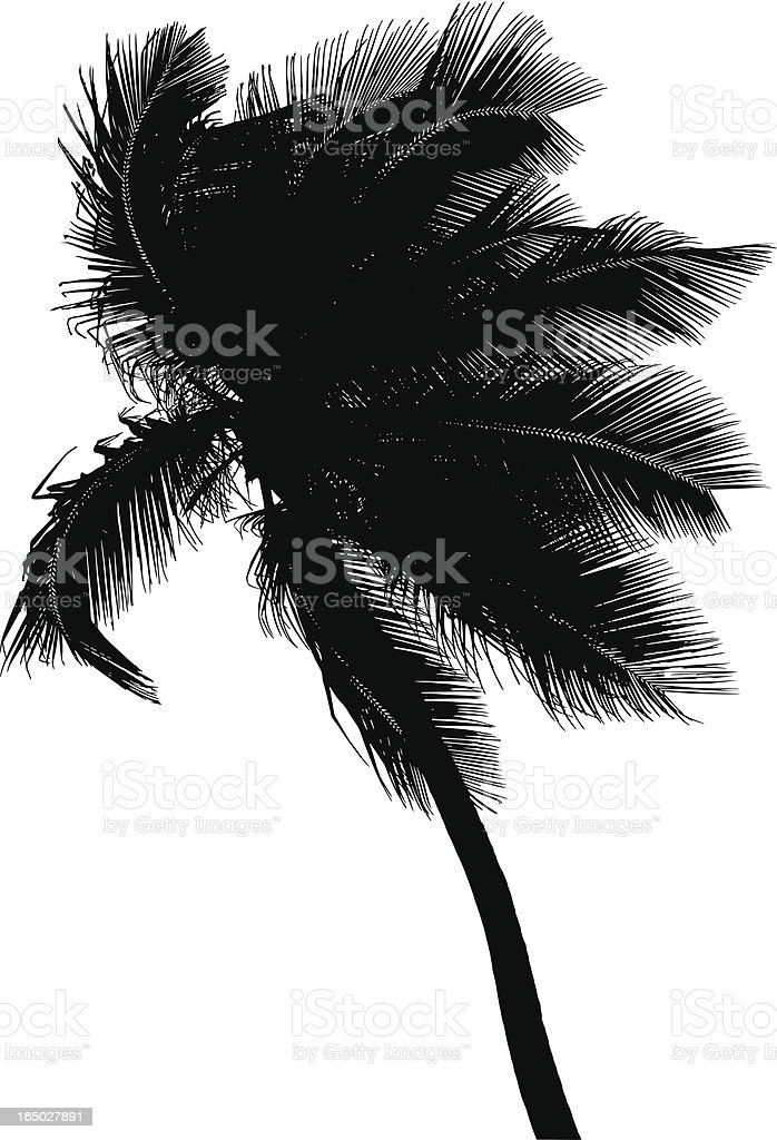 palm tree at the wind. royalty-free stock vector art