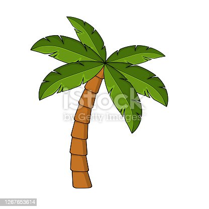 istock Palm tree cartoon isolated on white. Single palm clipart. Template for poster or postcard. Graphic element for tropical, exotic illustration. One high coco palmtree for summertime drawing. 1267653614