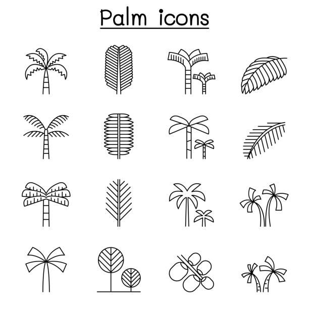 ilustrações de stock, clip art, desenhos animados e ícones de palm tree & coconut trees icon set in thin line style - oleo palma