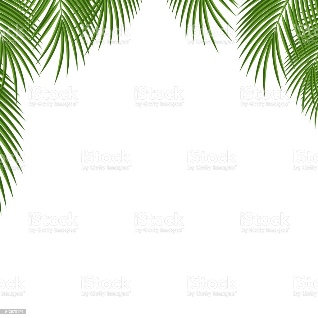 Palm Tree Frame Green Palm Leaves Template Isolated On Transparent