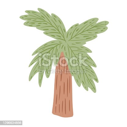 istock Palm tree isolated on white background. Abstract tropical plant with green foliage and stout brown tree trunk. 1296634856