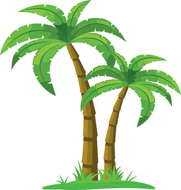 Royalty free green coconut clip art vector images illustrations istock - Palmier clipart ...
