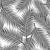 palm tree leaf black and white seamless pattern