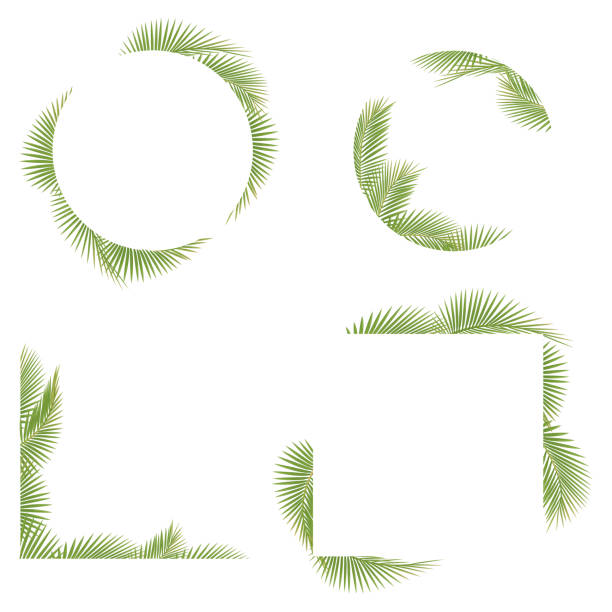 palm tree leaf frame - palm leaf stock illustrations, clip art, cartoons, & icons