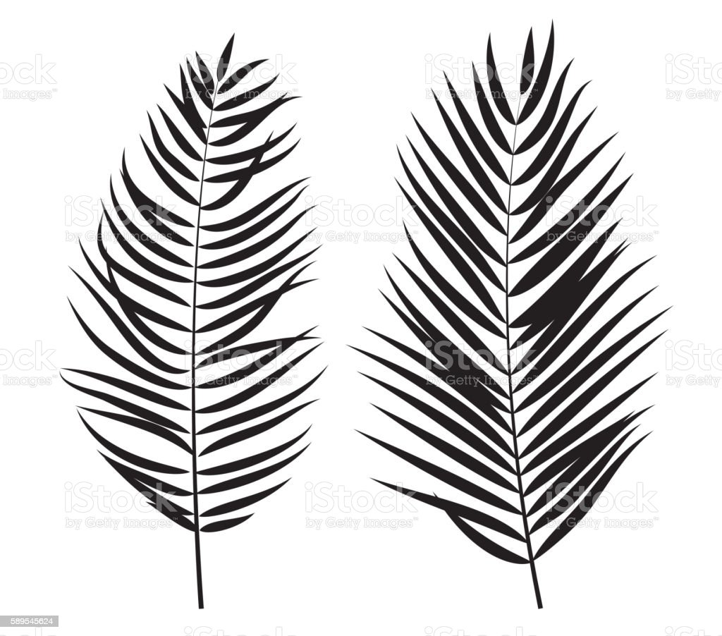 palm tree leaf silhouette isolated on white background stock vector art  u0026 more images of