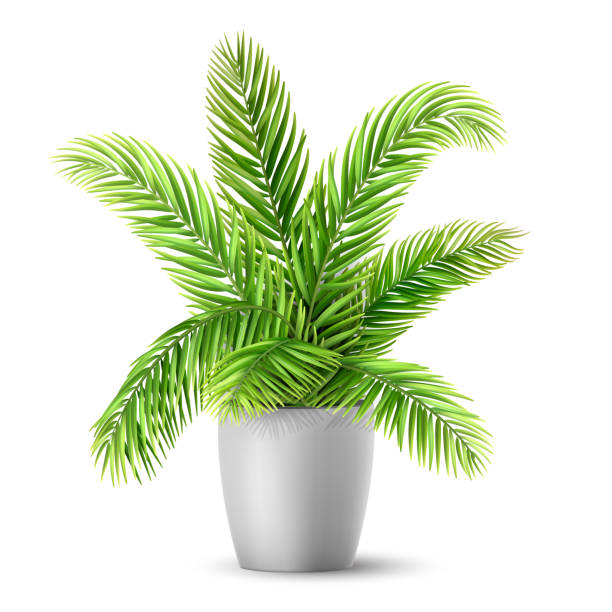 Palm tree leaves in a pot Palm tree leaves in a pot. A plant for decorating an interior of a house or an office. Vector realistic illustration. potted plant stock illustrations