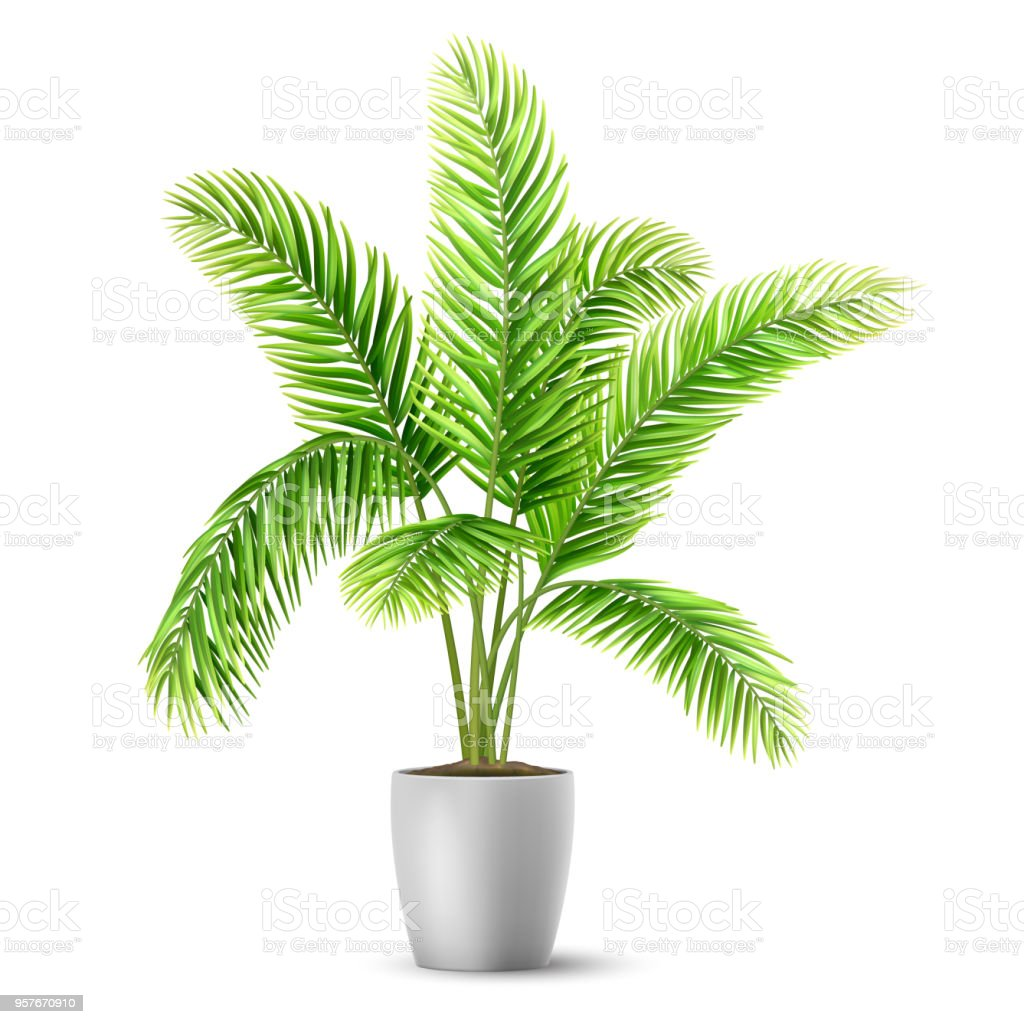 Palm Tree Leaves In A Pot Stock Illustration Download Image Now Istock