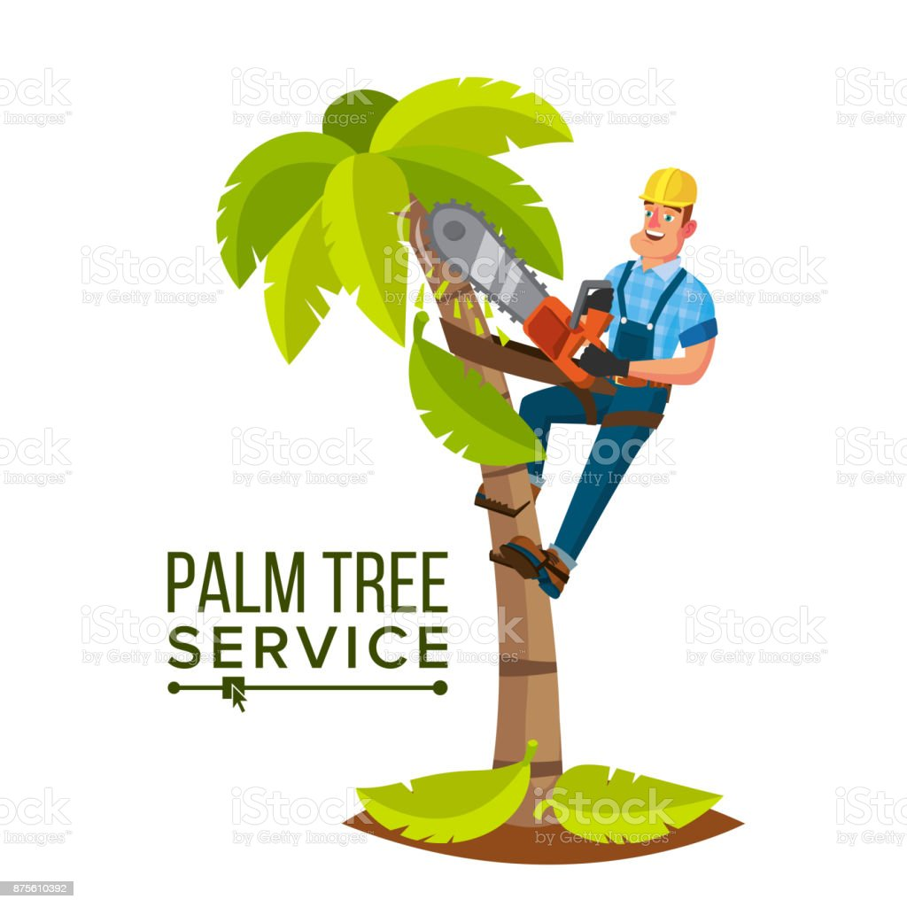 Palm Tree Service Vector. Professional Man. Trimming Tree Or Removal To Tree Pruning. Isolated Flat Cartoon Character Illustration vector art illustration