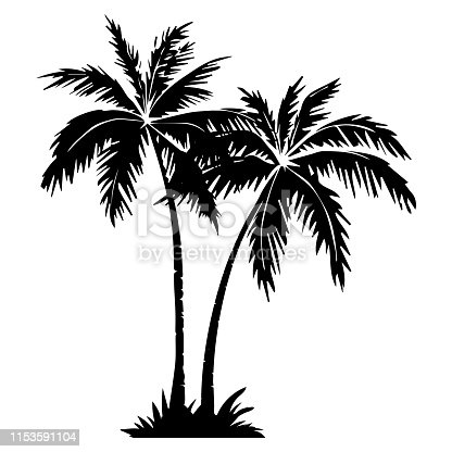 Palm tree silhouette. 2 palm trees isolated on white background. Vector illustration. for print, icon design, web, home decor, fashion, surface, graphic design