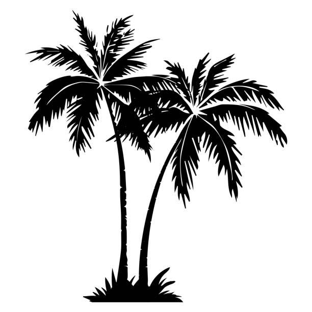 illustrations, cliparts, dessins animés et icônes de silhouette d'arbre de palmier. - palmier