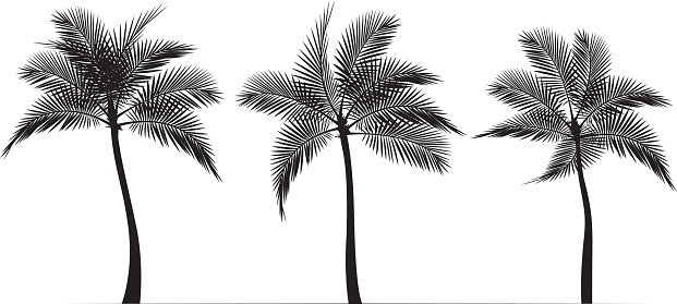 Palm Tree Silhouettes black and white