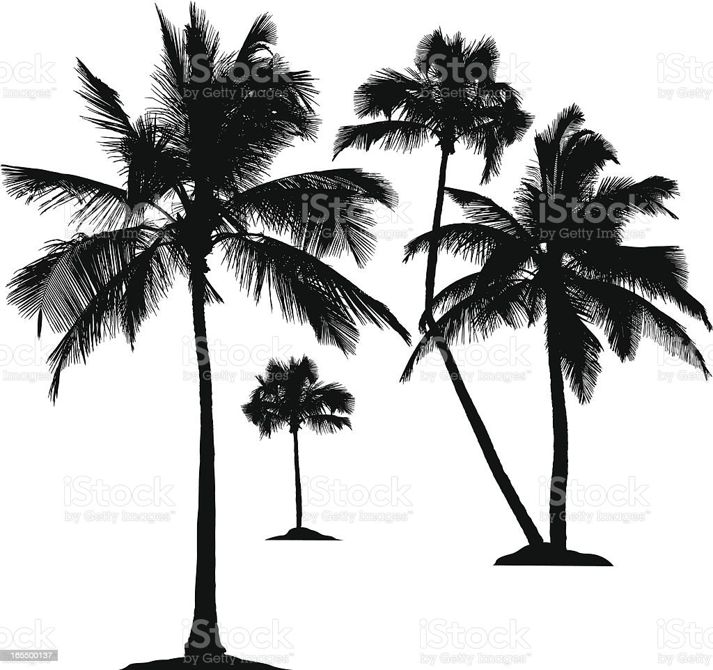 palm tree silhouettes stock vector art more images of clip art rh istockphoto com
