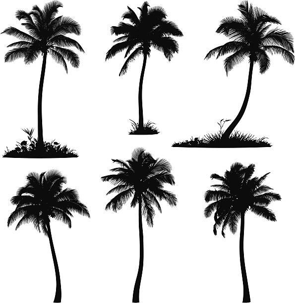 ilustrações, clipart, desenhos animados e ícones de as silhuetas das palmeiras - coqueiro