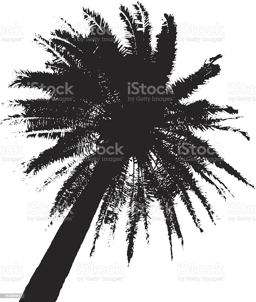 Palm Tree Vector eps + pdf royalty-free stock vector art