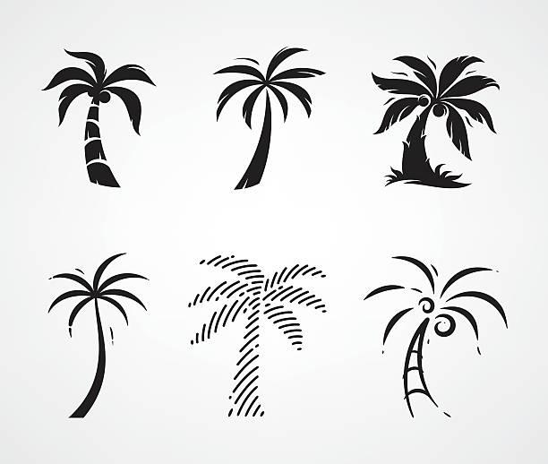 ilustrações, clipart, desenhos animados e ícones de de palmeira - coqueiro