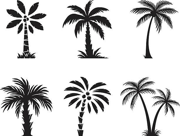 Palm tree – Vektorgrafik