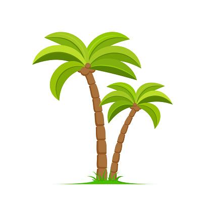 Palm tree vector island coconut cartoon icon. Palmtree island desert isolated tropical icon